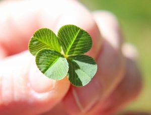 a hand holding a four leaf clover (very shallow depth of field)